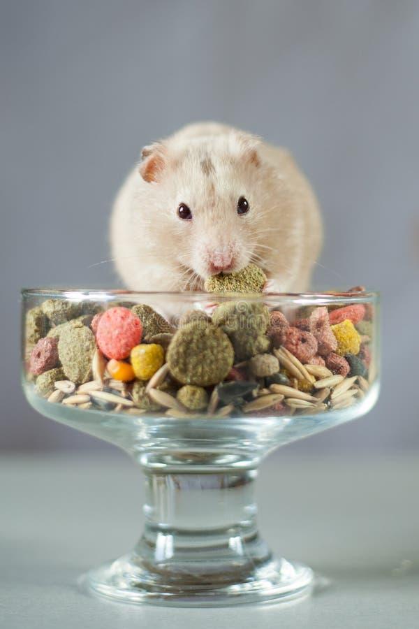 Hamster parmi la nourriture colorée pour des rongeurs sur un fond gris photographie stock libre de droits