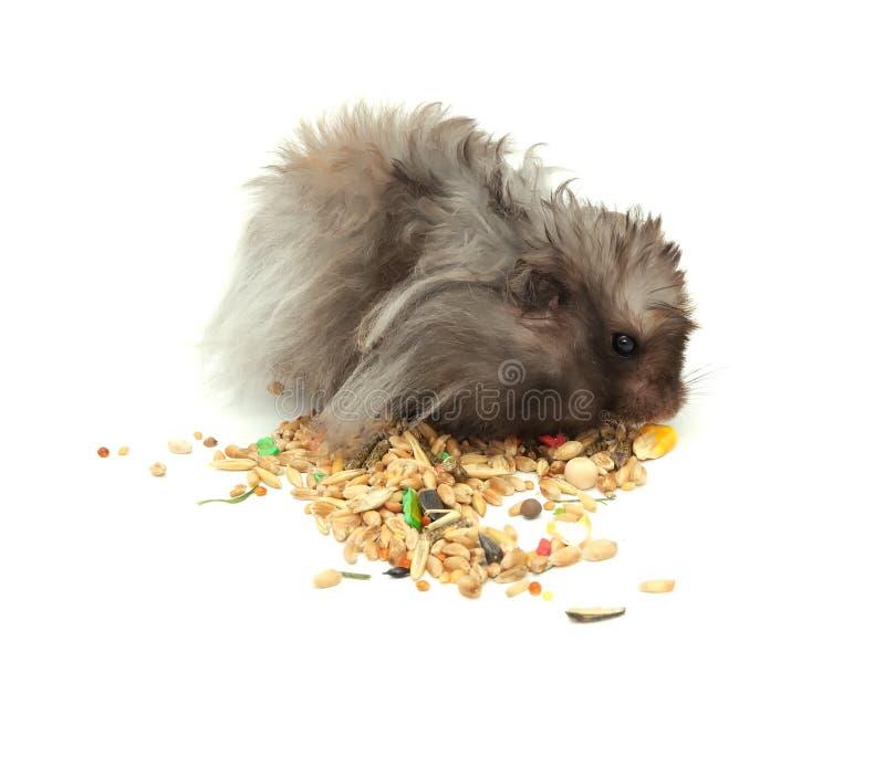 Hamster pelucheux mangeant des textures photo stock