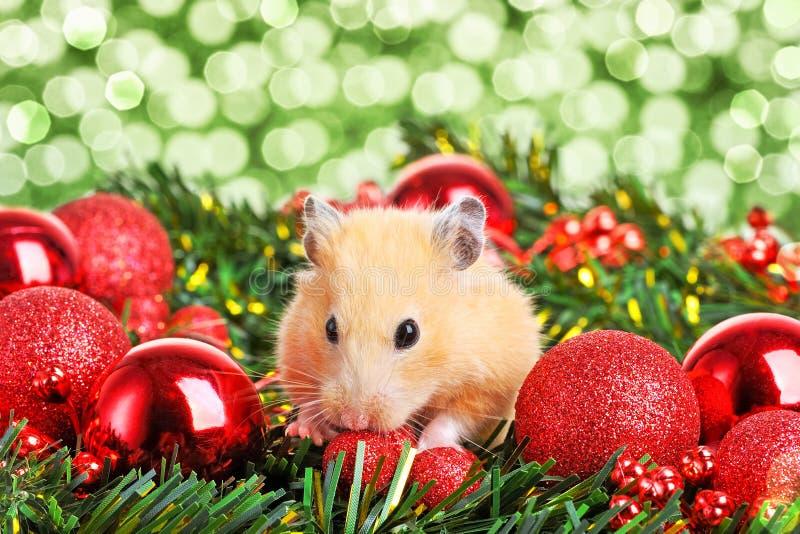 Hamster pequeno engraçado foto de stock