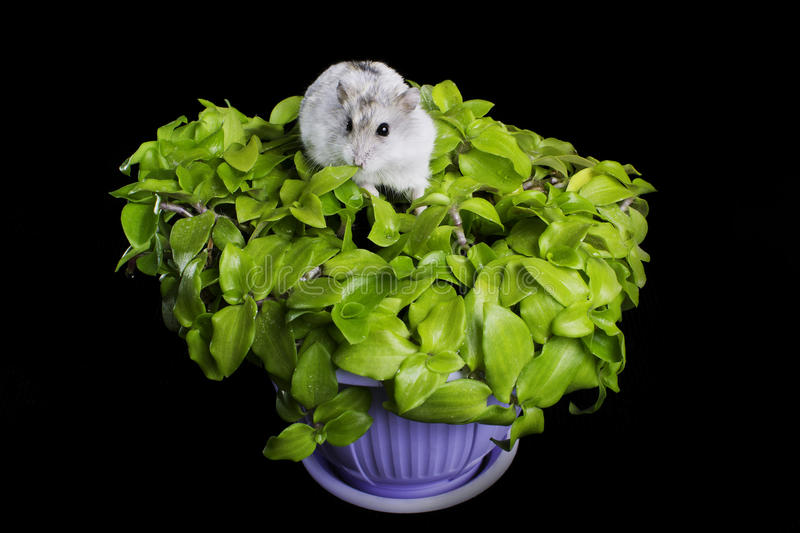 Download Hamster on a plant stock image. Image of closeup, darling - 24597237
