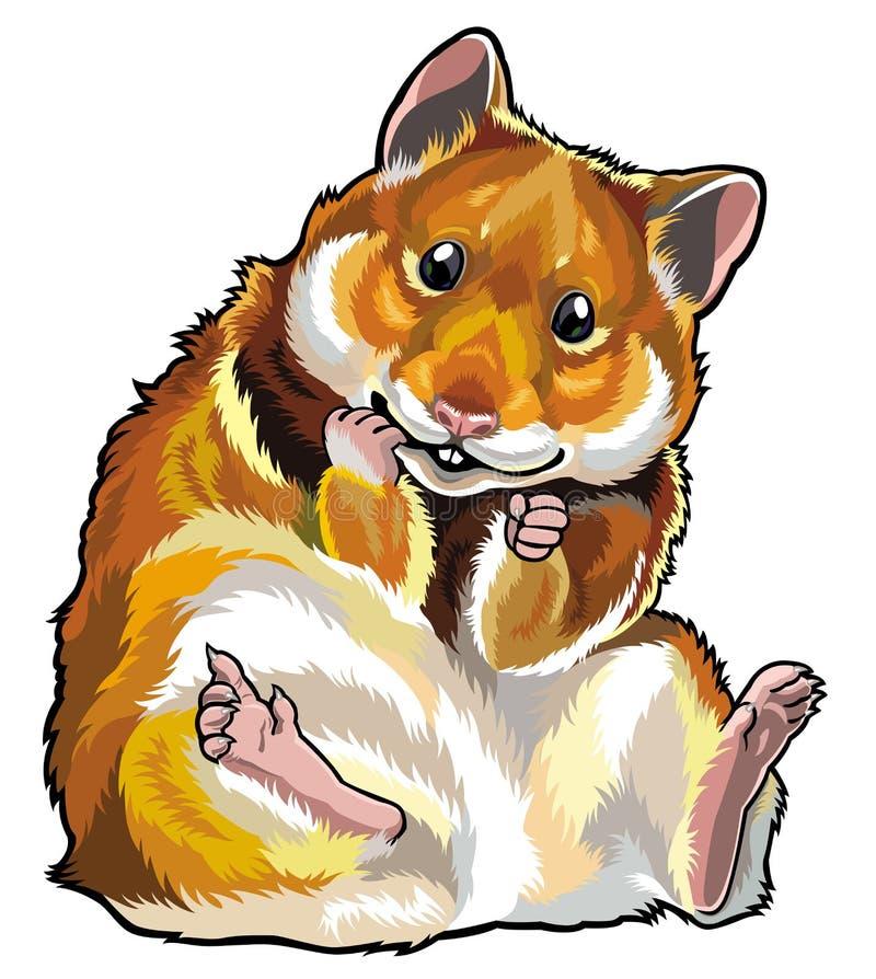 Hamster. Sitting hamster isolated on white background stock illustration