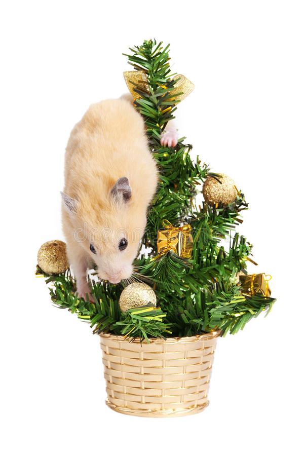 Hamster sur l'arbre de Noël photo stock