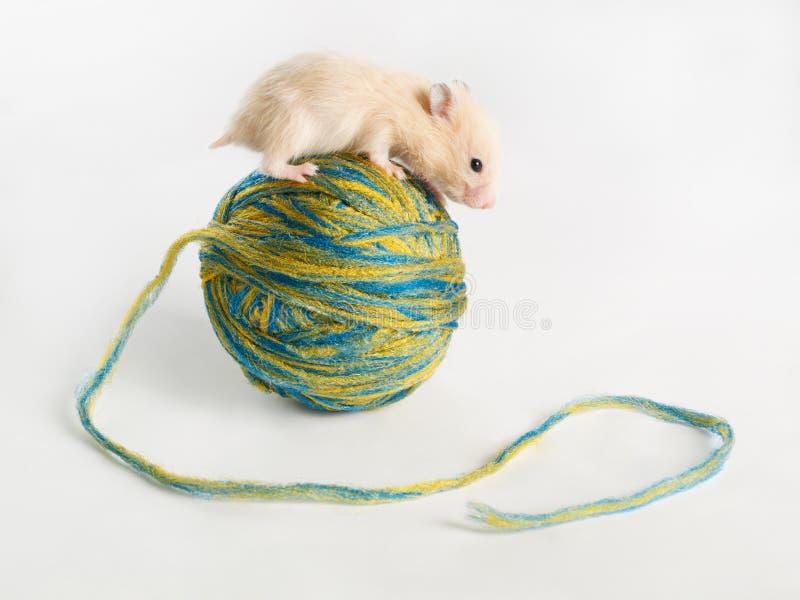 Hamster sur la bille photographie stock