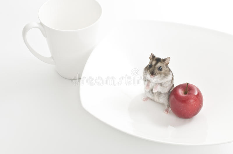 Download Hamster Royalty Free Stock Photos - Image: 32869488