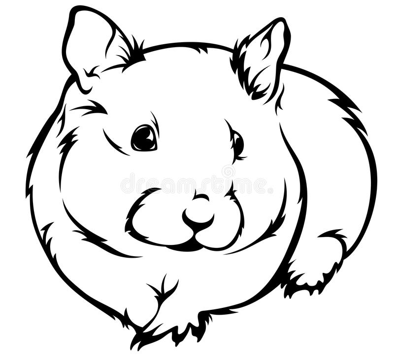Hamster vector. Cute hamster (Cricetus) illustration - black and white outline royalty free illustration