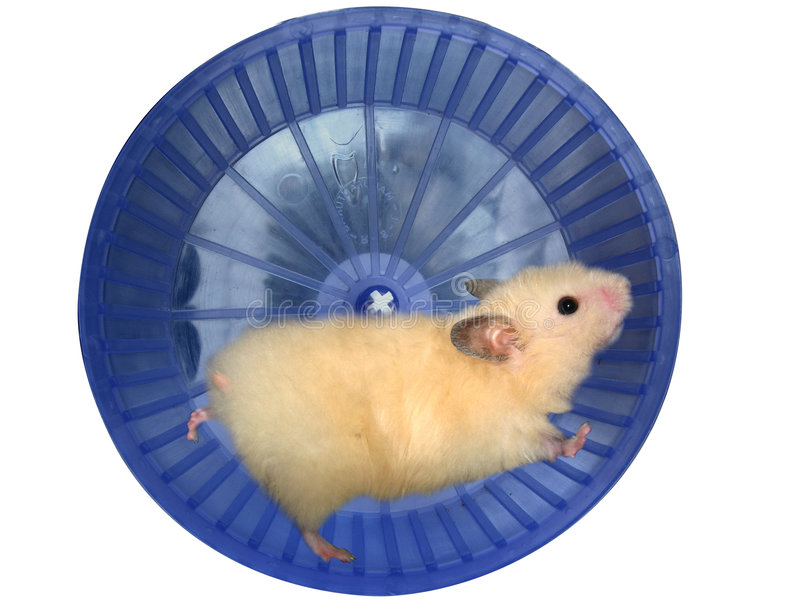 Hamster in a wheel stock photography