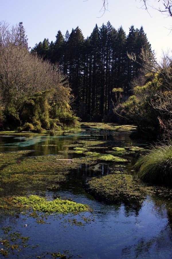 Download Hamurana Stream stock image. Image of redwood, water - 26107903