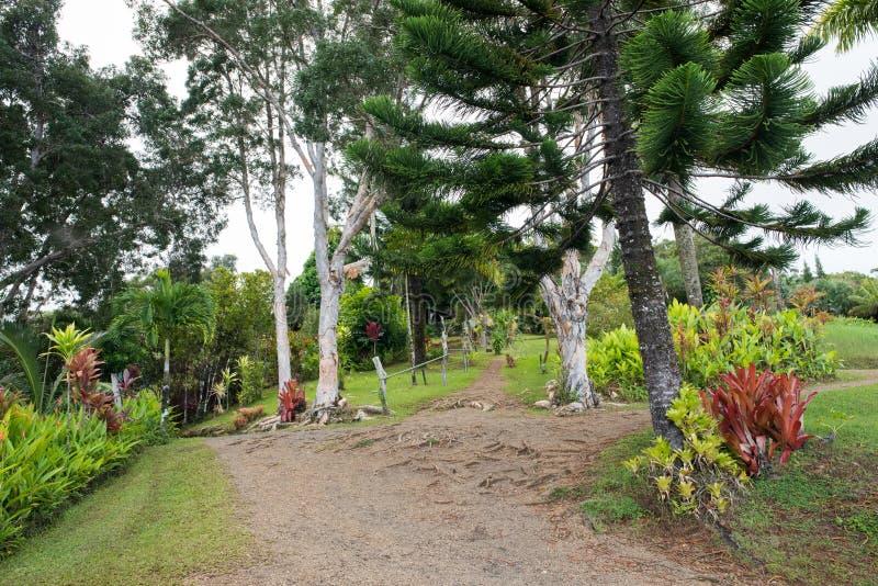 Hana, Hawaï stock afbeelding