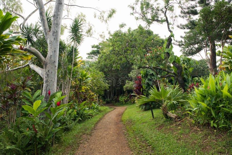 Hana, Hawaje zdjęcie royalty free
