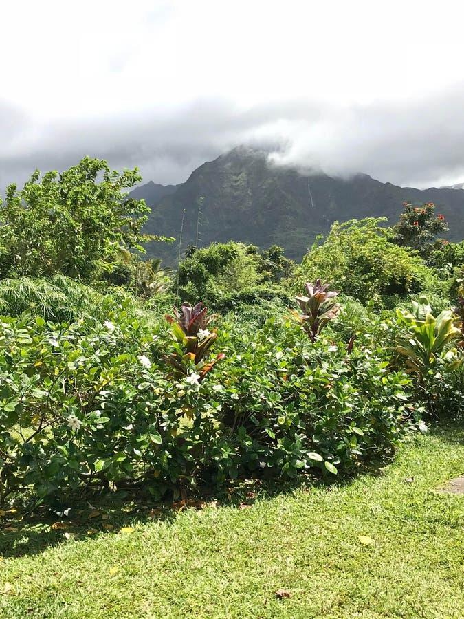 Hanalei海湾,考艾岛,夏威夷,美国 免版税库存照片