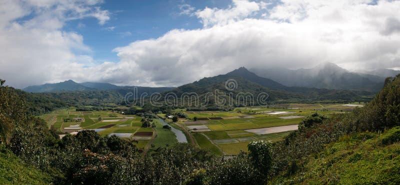 hanalei考艾岛全景谷 库存照片