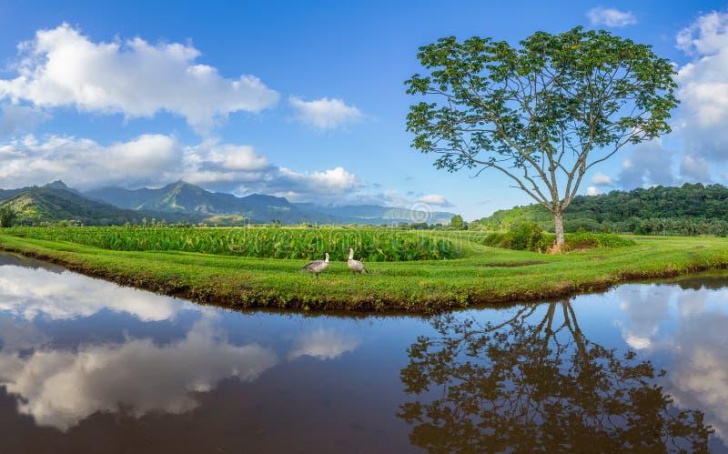 Hanalei谷全景在考艾岛 免版税库存照片