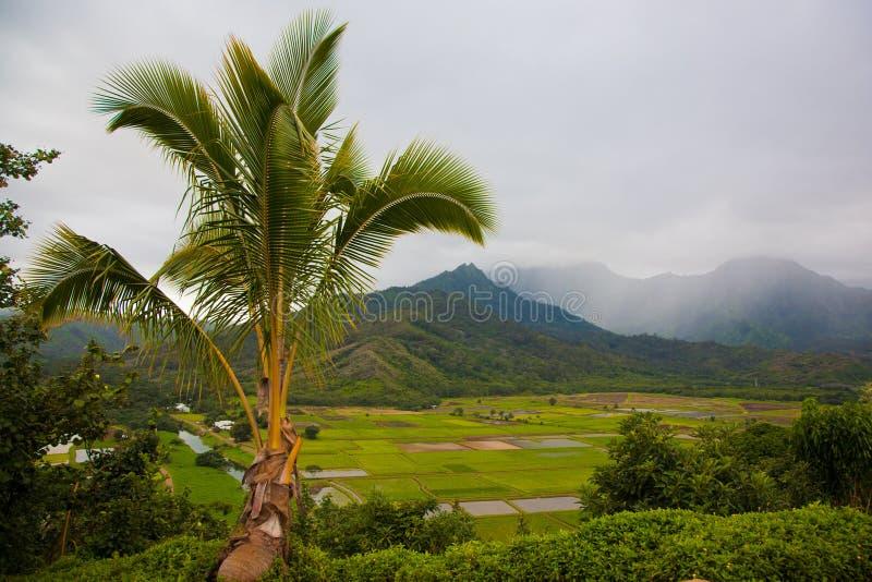 Hanalei谷在有雾的天俯视 库存图片