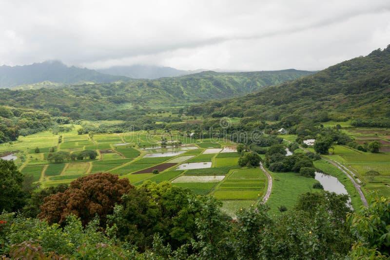 Hanalei-Tal, Hawaii stockfotos