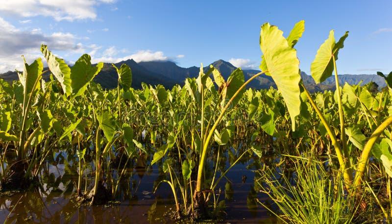 Hanalei Tal in Kauai stockbild