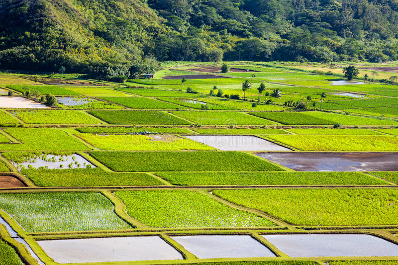 Hanalei Valley Details Royalty Free Stock Images