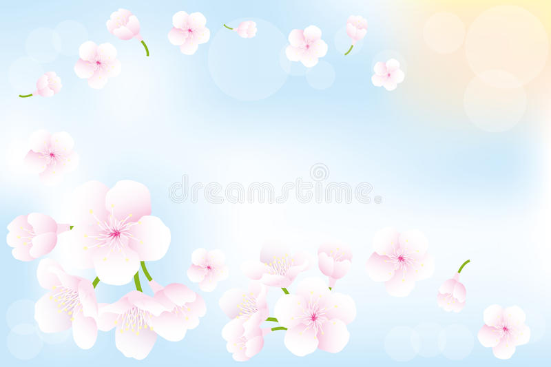 Hanami - Cherry blossoms background. Flying cherry-blossoms in spring - seasonal background with place for text vector illustration