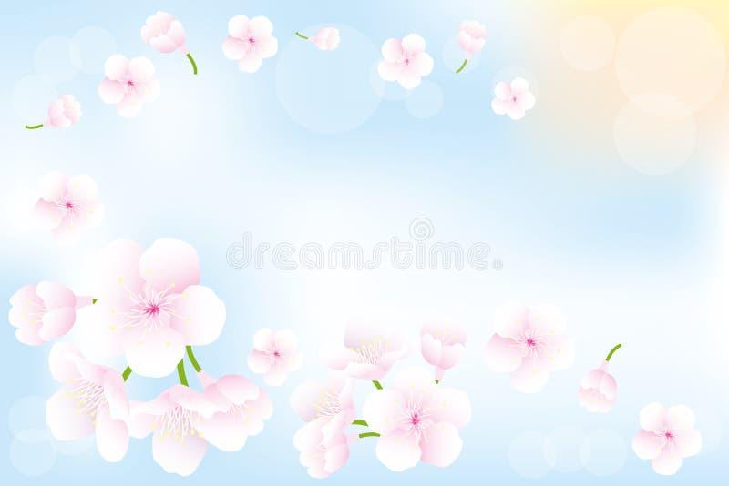 Hanami - fondo de las flores de cerezo ilustración del vector
