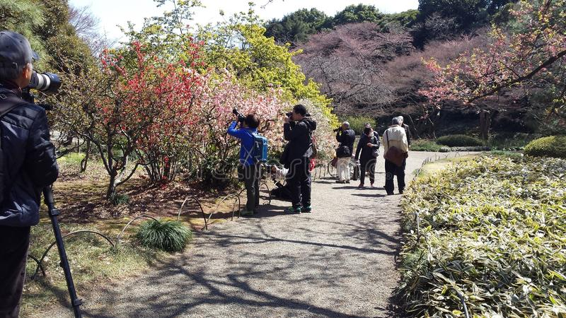 Hanami-Manie in nationalem Garten Shinjuku Gyoen - Tokyo lizenzfreie stockbilder