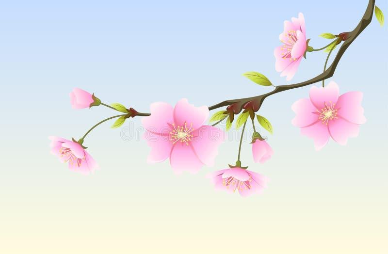 Hanami: spring sakura royalty free illustration