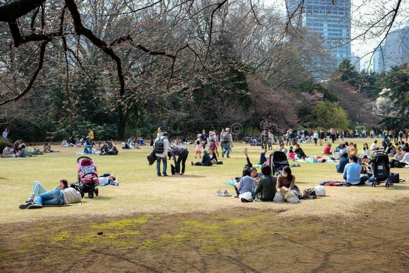 Hanami in Tokyo, Japan royalty free stock images