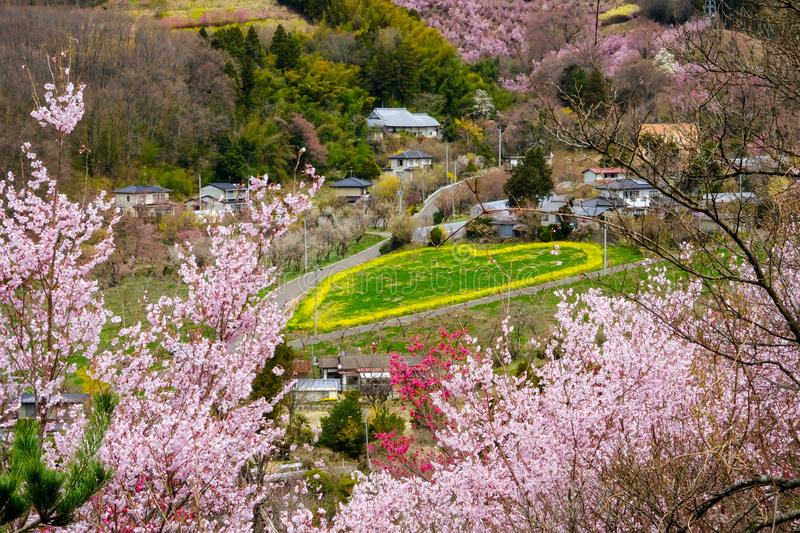 Green heart with yellow outline and flowering trees covering the hillside,Hanamiyama Park,Fukushima,Tohoku,Japan. royalty free stock images