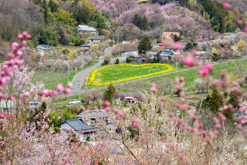 Green heart with yellow outline and flowering trees covering the hillside,Hanamiyama Park,Fukushima,Tohoku,Japan. royalty free stock photos