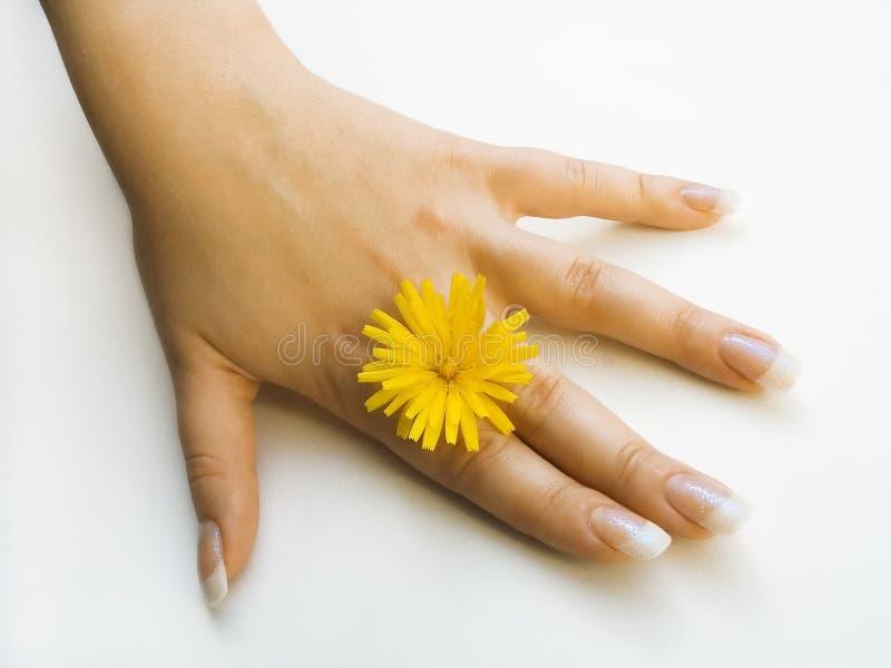 Hand stock photos