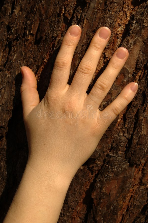 Free Hand Against Bark Stock Photography - 842392