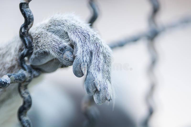 Download Hand animal in cage stock image. Image of bars, mammal - 50635617