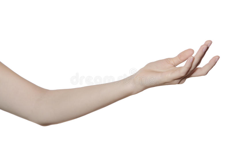 Hand and arm isolated on white royalty free stock image