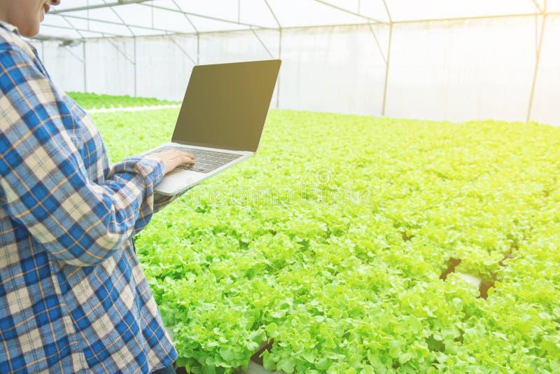 Hand of Asian usa il laptop record report di quantità di ortaggi verdi in un sistema idroponico a effetto serra,piccolo imprendit fotografia stock libera da diritti