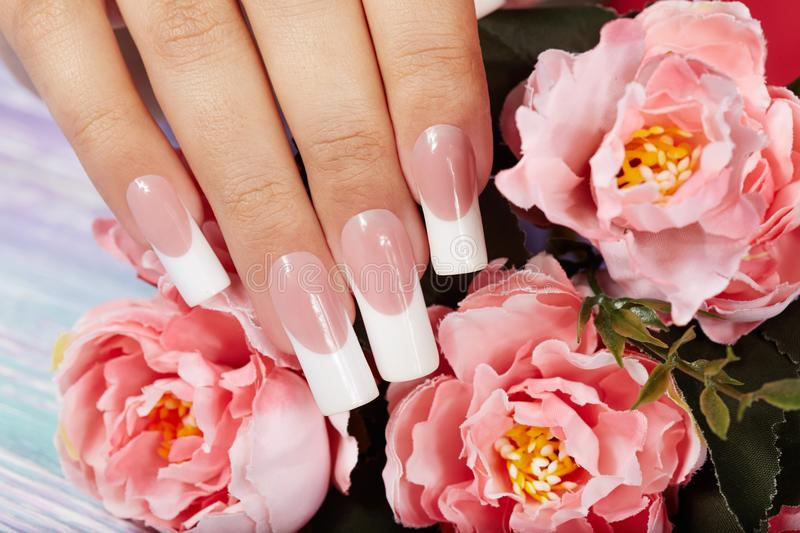 Hand with beautiful long artificial french manicured nails. And pink peony flower royalty free stock photography