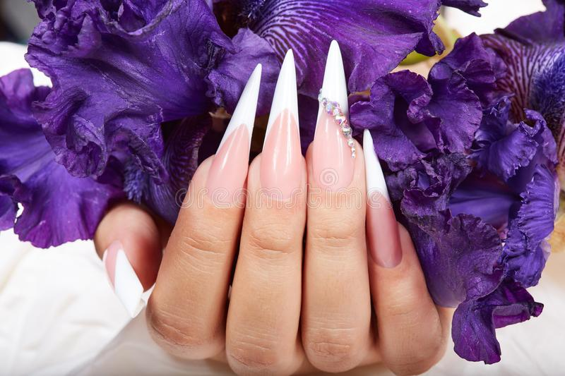 Hand with long artificial french manicured nails and a purple Iris flower. Hand with beautiful long artificial french manicured nails and a purple Iris flower royalty free stock images