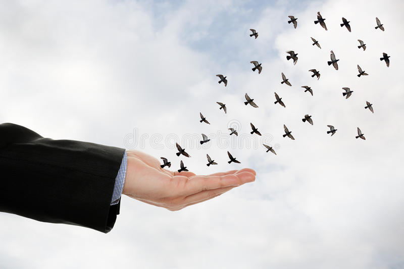 Hand and birds royalty free stock photos