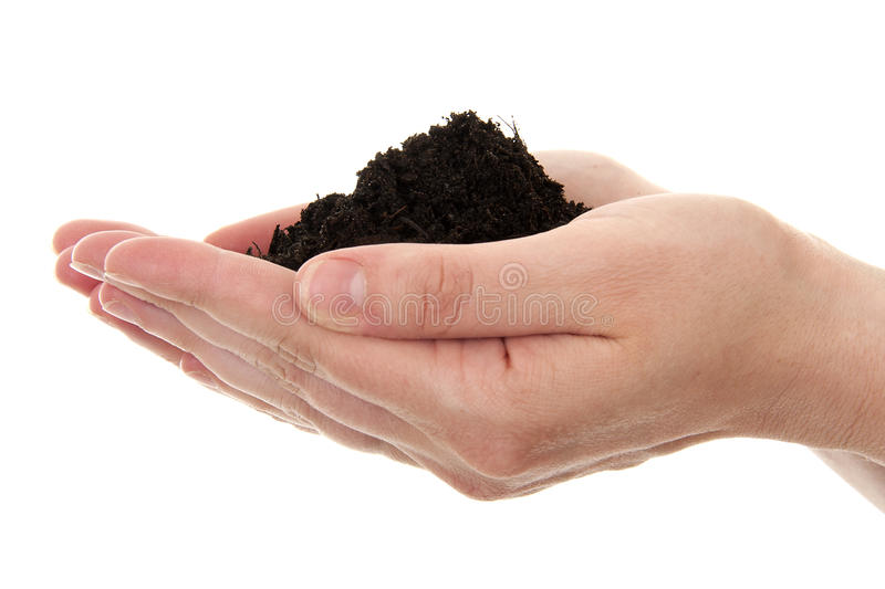 Hand with black soil. Hands are holding black garden soil in closeup over white background stock photo