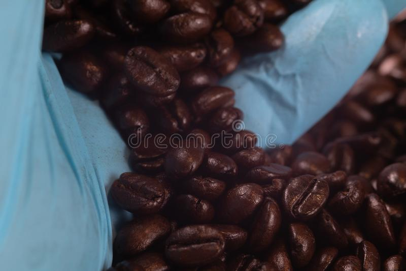 Hand in blue glove holding roast coffee beans royalty free stock images