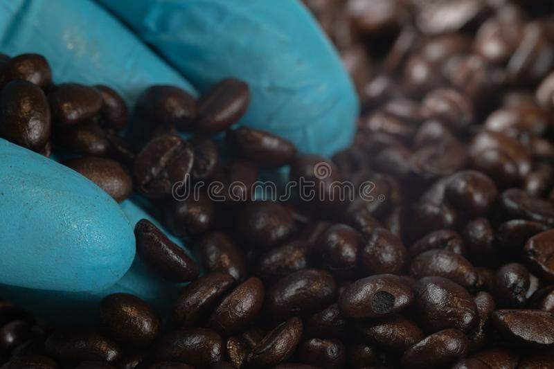 Hand in blue glove holding roast coffee beans stock images