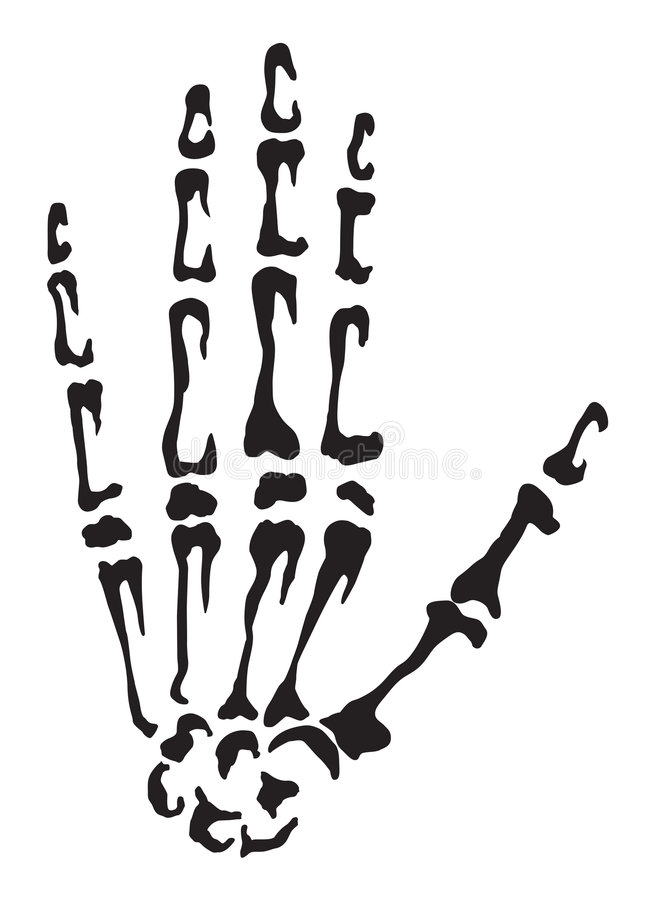 Download Hand bones stock illustration. Image of carpal, medical - 6639663