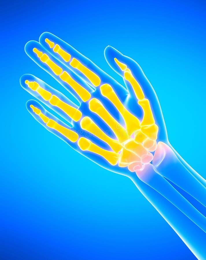 The hand bones stock illustration