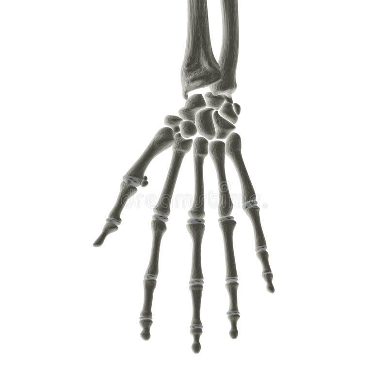 Hand Bones X-ray Royalty Free Stock Photography