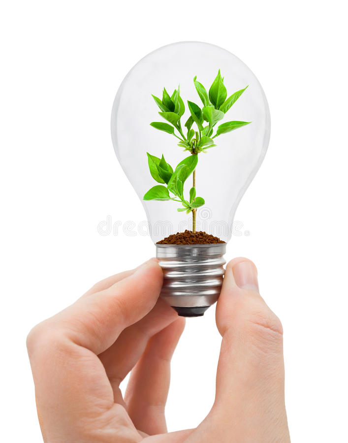 Hand with bulb and plant. Isolated on white background stock images