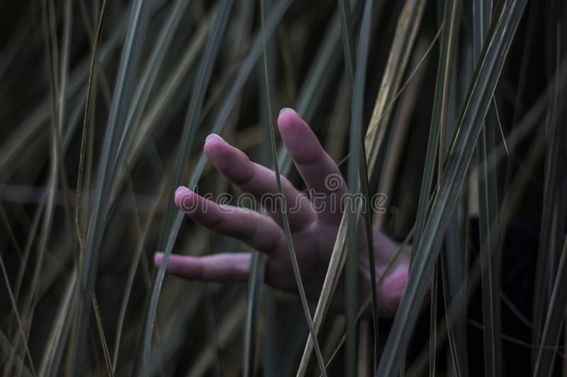 A hand in the bush. A hand coming out of the bush royalty free stock image