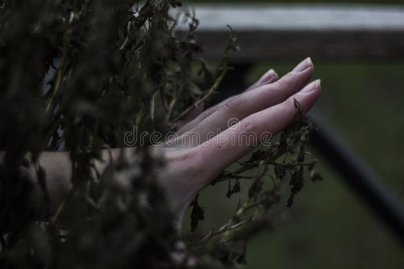 A hand in the bush. A hand coming out of the bush stock photos