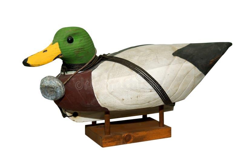 Hand carved Mallard Drake Decoy Duck stock photo