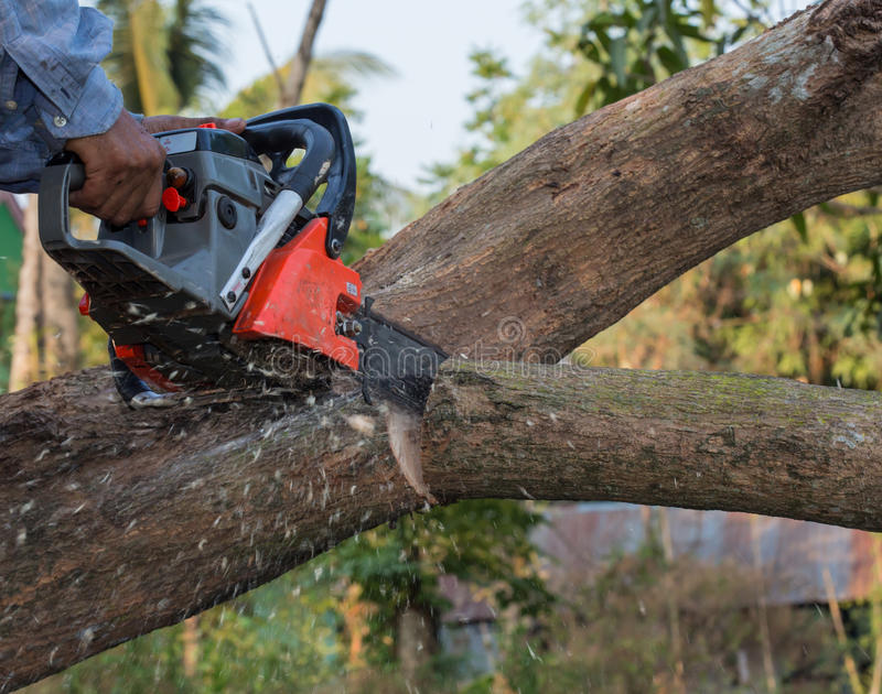Hand with chainsaw cutting the tree stock photography
