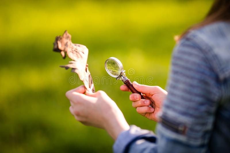 Hand of child with magnifying glass stock photo