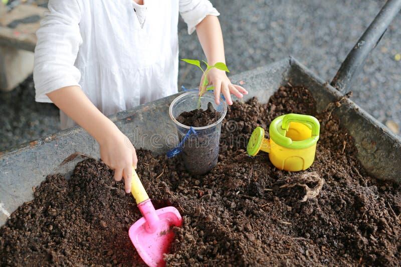 Hand children for tree planting.  stock photo