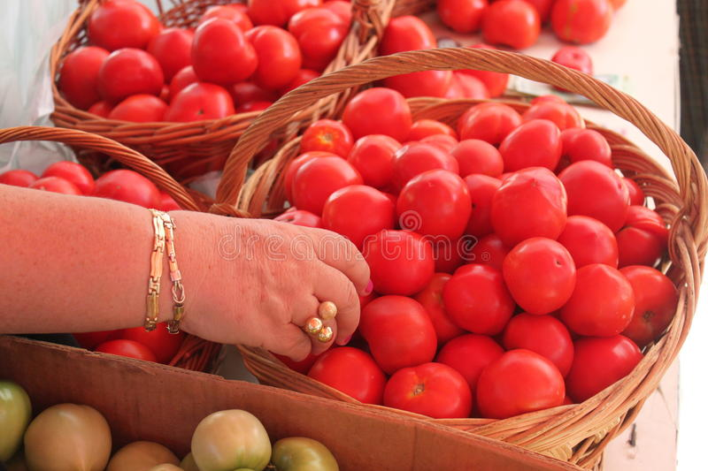Download Hand choosing tomatoes stock photo. Image of pile, group - 26882616