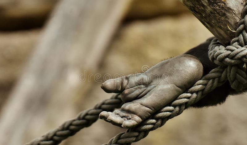Hand, Close Up, Tree, Metal royalty free stock photo